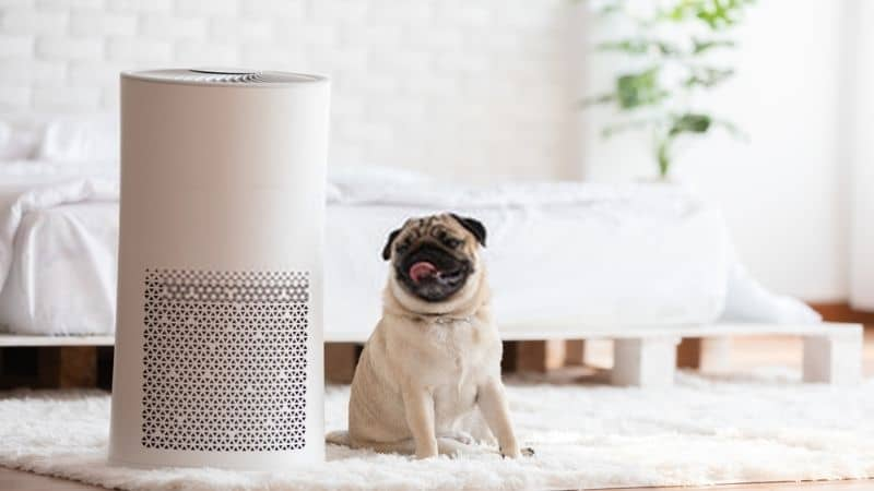 Best Air Purifier for Pets – Removes Pet Hair and Dander